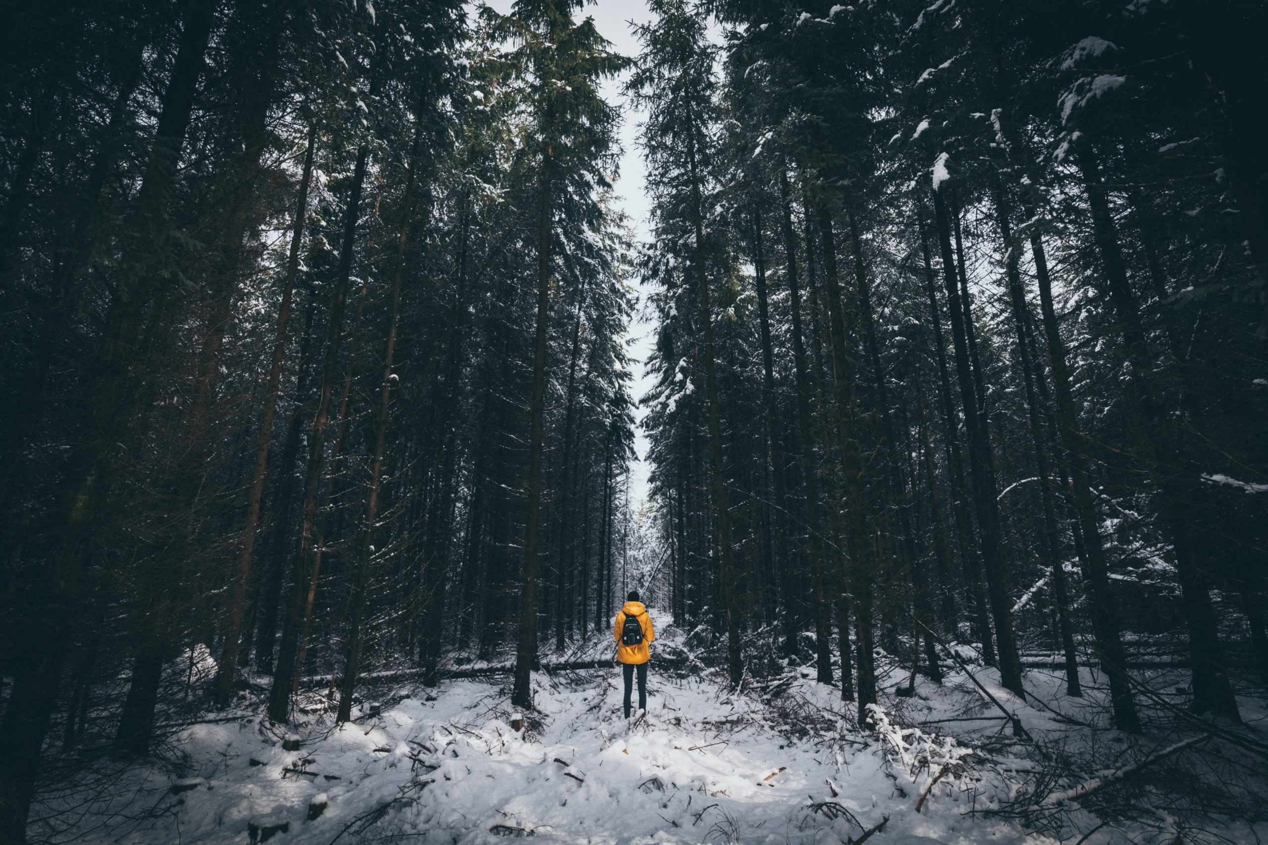 Hiker in yellow jacket with backpack paused in middle of winter forest